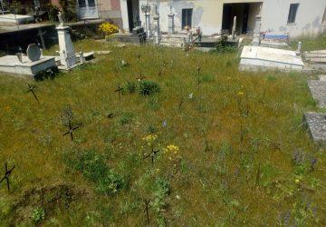 Puntalazzo: erbacce e buio al cimitero, via Umberto dissestata