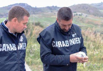 Catania, giro di vite dei Carabinieri Forestali sul bracconaggio. Denunce, perquisizioni e sequestri