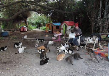 """Catania, sigilli della Polizia locale alla colonia felina """"Oasi Felix"""""""