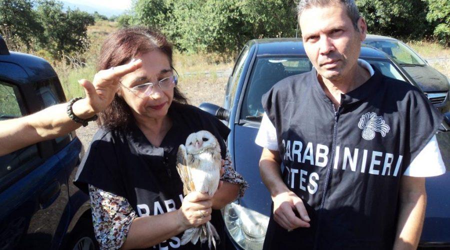 Acireale, carabinieri-forestale liberano in natura 3 barbagianni