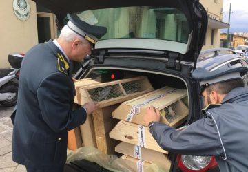 Catania, Guardia di finanza traccia bilancio sui controlli al porto e aeroporto