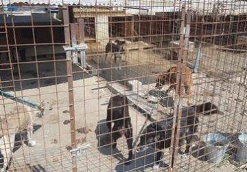 Catania, scoperto canile con cani in pessime condizioni VIDEO