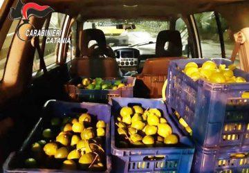 Tagliaborse, sventato furto di limoni: denunciati due catanesi