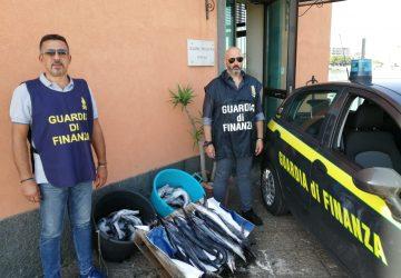 Catania, sequestrati dalla Guardia di Finanza 43 esemplari di pesce spada novello
