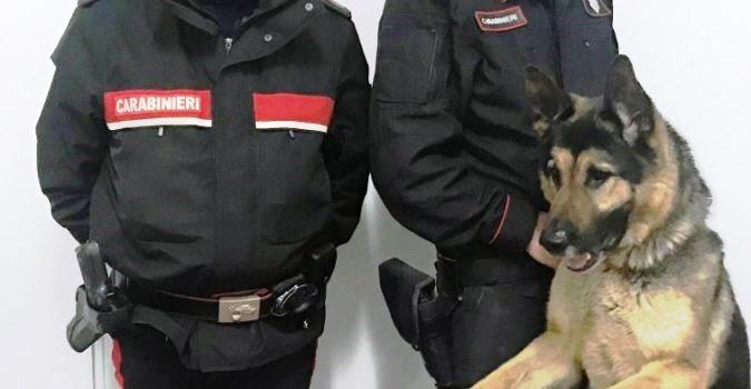 Zafferana, carabinieri scovano droga in una pizzeria: un arresto