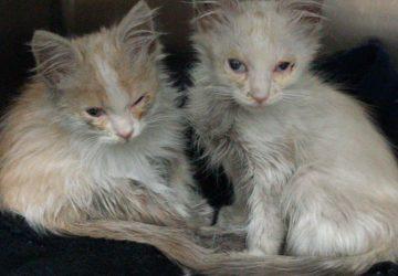 Riposto, ignobile gesto contro due gattini entrambi cosparsi di nafta
