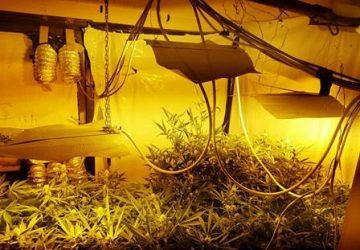 "Catania, mini serra di marijuana ""fai da te"": un arresto"