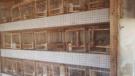Oasi del Simeto, tutela degli animali: 11 denunciati. Scoperti 40 cani, 5 cavalli, un miny pony, tartarughe e cardellini maltrattati