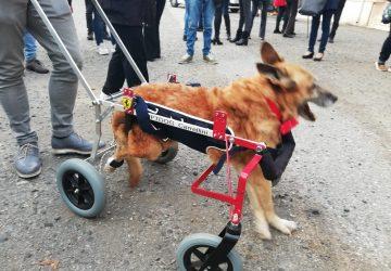 Mascali, il cagnolino Lazzaro dell'Oasi del Randagio ha passato il ponte dell'arcobaleno