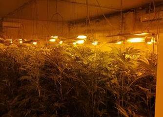 Catania, piantagione di erba in casa: 6 arresti della polizia - Gazzettinonline