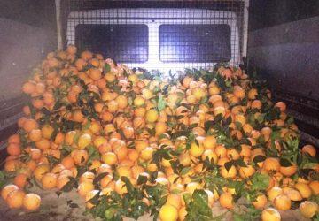 Ramacca, Cc sventano grosso furto di agrumi: recuperata una tonnellata di arance