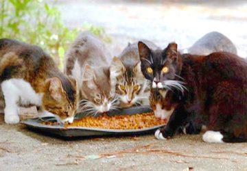 """Giardini Naxos: l'Amministrazione Comunale """"adotta"""" i gatti randagi del paese"""