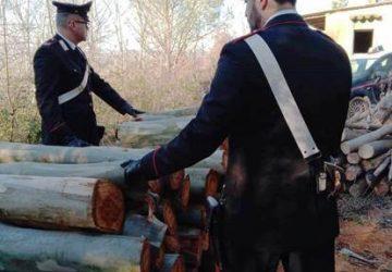 San Michele di Ganzaria, recuperato carico di legname rubato: denunciati i due ladri