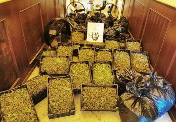 Catania, arrestati per aver curato la lavorazione di 180 chili di droga
