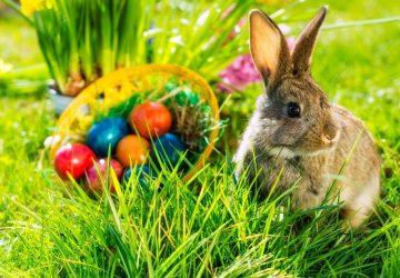 """Pasqua, coronavirus e poesia: """"A Favuledda i Pasqua"""""""