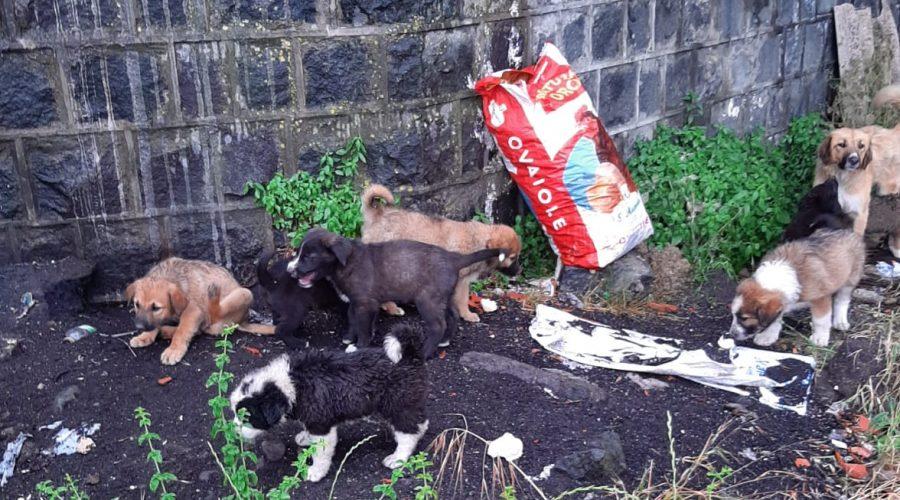 Giarre, una ventina cuccioli in pericolo ha bisogno di un riparo