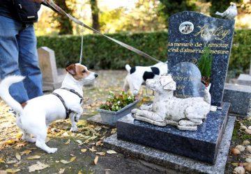 """Riposto, l'idea del vice presidente del Consiglio, D'Urso: """"avviare l'iter per un cimitero per cani"""""""