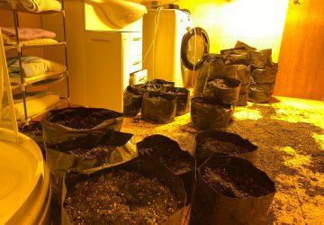 Allevatore si riconverte alla coltivazione… di marijuana: arrestato 41enne