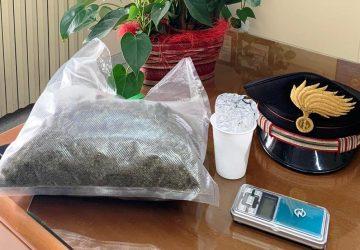 Vede il cane antidroga e consegna circa 400 grammi di marijuana: arrestato