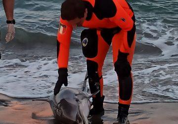 Catania, Vigili del Fuoco tentano di soccorrere un delfino alla Plaia
