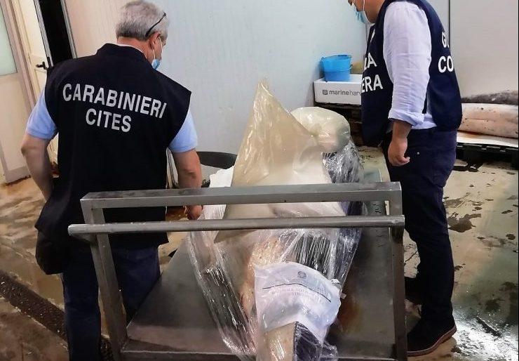 Catania, ritrovato e sequestrato lo squalo Mako pescato a Ognina