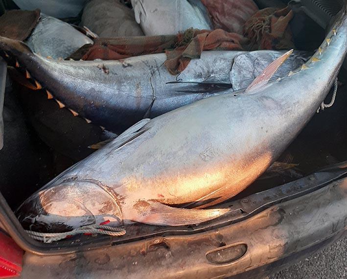 Riposto, sequestrati 300 kg di tonno rosso in scarse condizioni igienico sanitarie