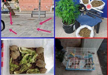 Controlli serrati dei carabinieri nei Comuni della cintura catanese: sequestrati 4 Kg di marijuana e 1 fucile. Denunciate 4 persone