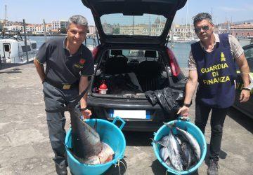 Catania: sequestrati circa 400 kg. di tonno rosso