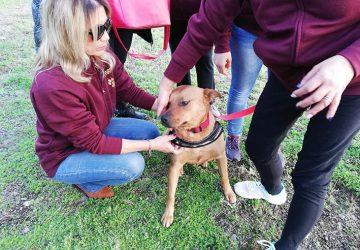 Mascali, storie a lieto fine: Stella festeggiata dei volontari
