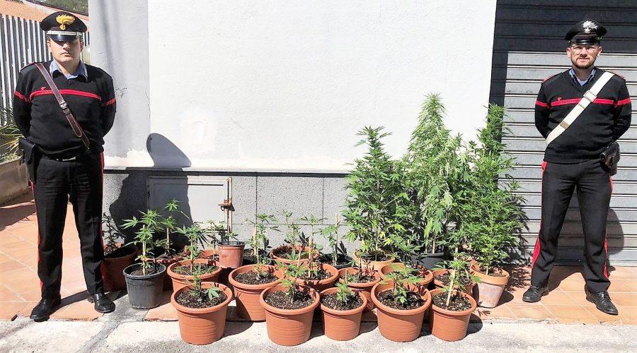 Castiglione di Sicilia, agricoltore con il vizio dell'erba: denunciato 47enne di Francavilla