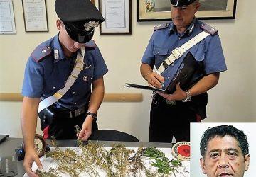 Mascali, beccato con 20 piante di canapa indiana: arrestato un 51enne
