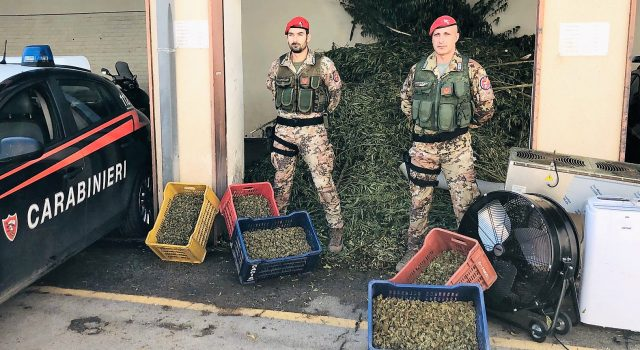 Operazione antidroga: 6 persone arrestate. Sequestrati 1.300 Kg di marijuana NOMI FOTO VIDEO