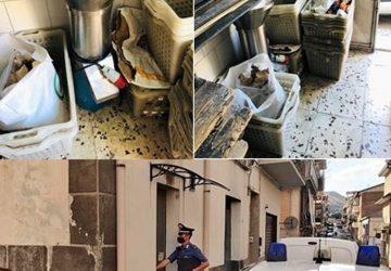"""Ramacca, chiuso il panificio degli """"orrori alimentari"""": denunciato il titolare"""