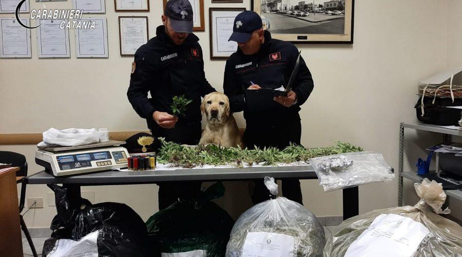 Mascali, carabinieri scovano a Santa Venera 25 chili di marijuana e 40 piante: fermato un 37enne