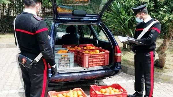 Catania, presi con le arance nel sacco: due denunciati