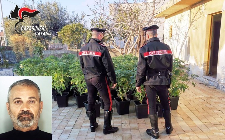 """Piantagione di canapa indiana a """"costo zero"""": arrestato 52enne VIDEO"""
