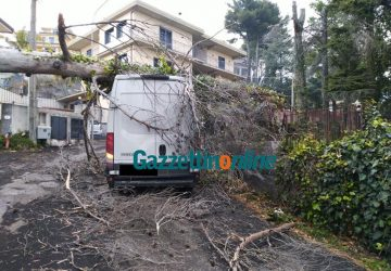 Zafferana, il forte vento spezza un albero che precipita su un furgone