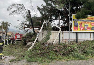 Giarre, precipita un pino che danneggia cartellonistica pubblicitaria