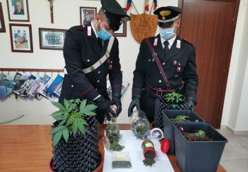 """Gaggi, serra per cannabis in casa: arrestato 25enne con l'hobby del """"giardinaggio"""""""