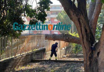 Giarre, ramo di pino precipita a terra. Intervento dei VvF