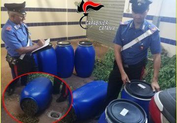 """Mascali, ancora un colpo al traffico della droga. CC sequestrano 18 chili di """"erba"""": un arresto"""