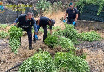 Scovata piantagione di marijuana a Bronte: un arresto e una denuncia