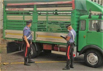 Randazzo, intercettati e denunciati due razziatori di bestiame