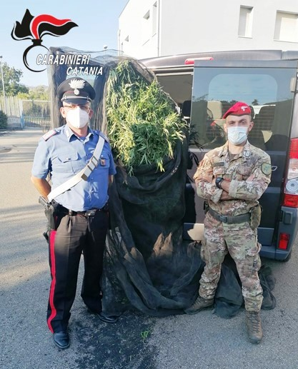 Fiumefreddo, nell'azienda agricola oltre 300 piante di cannabis attiva: due arresti
