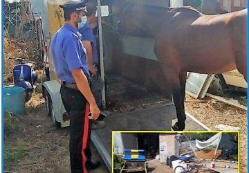 Misterbianco, sequestrato purosangue inglese: nella stalla medicinali privi di prescrizione veterinaria
