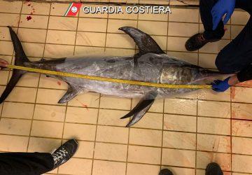 Riposto, sequestrato pesce spada privo di tracciabilità