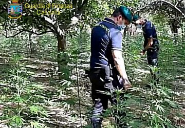 Catania, Fiamme gialle arrestano un 50enne: vigilava una piantagione